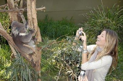gisele-koala.jpg